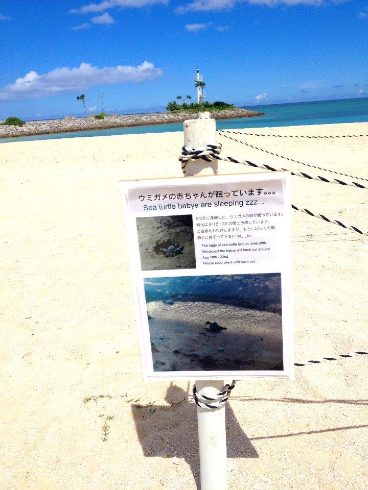 海龜在沖繩乾淨的海域/海灘棲息
